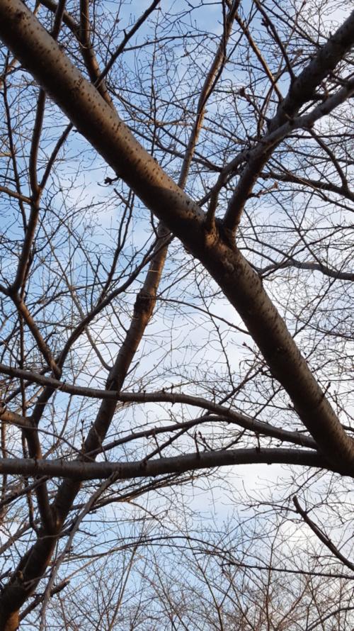 幹も枝も色めきだつ春