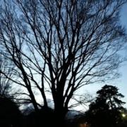 樹の幹が春めく