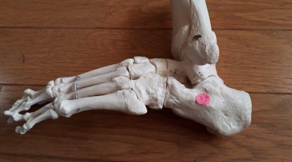 カナを意識すると膝痛がよくなってきた