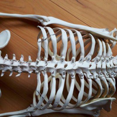 背骨のチカラ